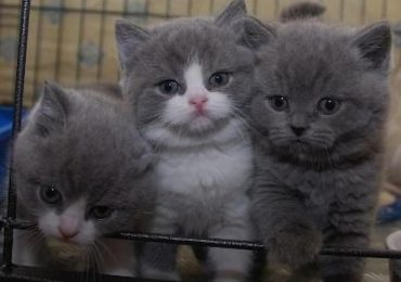 Expert Advice On How To Take Best Care Of Your Kitten In London